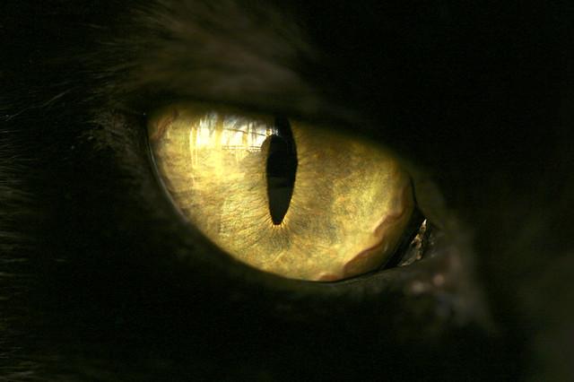 Cats Eye Monster