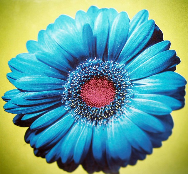 Blue Flower - A Gallery On Flickr