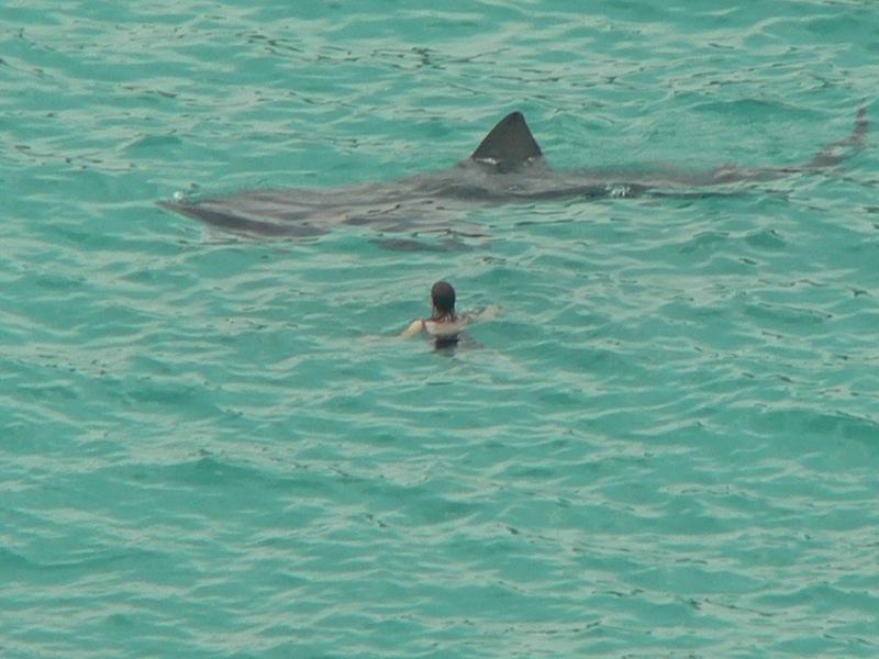 Shark season on the coast of NC