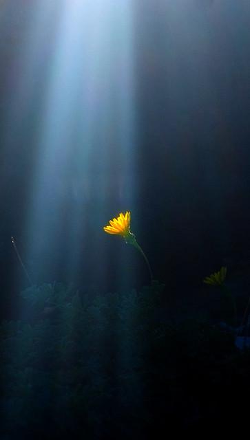 In fondo al mar..