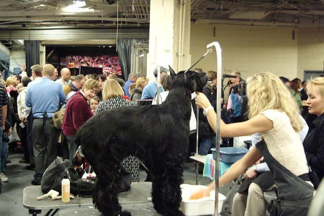 Tv Show Groomed Animal Shelter Dog