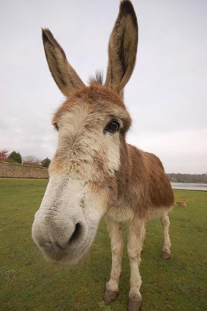 Wide Angle On Donkey Flickr Photo Sharing