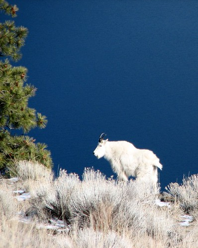 mountain-goat-lake
