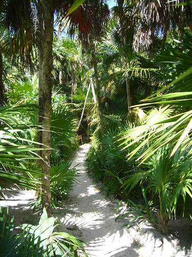 Backyard Jungle Tropical Landscapes : images about jungle gardens on Pinterest  Tropical Gardens, Tropical
