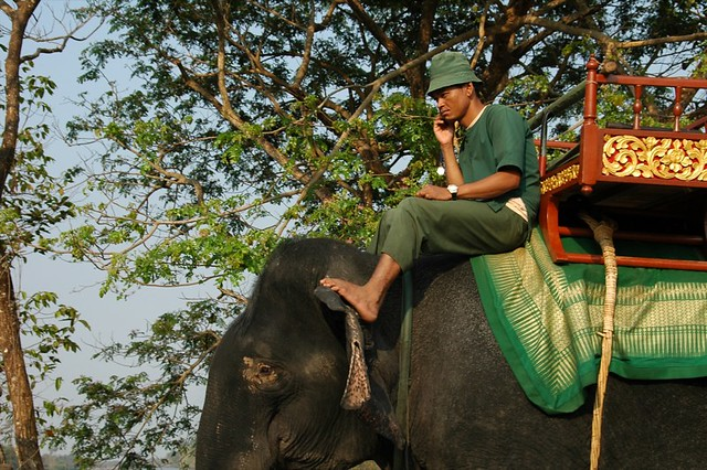 Man on top of an Elephant Using a Mobile Phone - Angkor, Cambodia