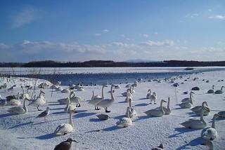 濤沸湖(白鳥公園)