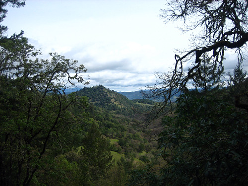 ca trees forest annwfn