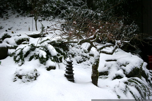 winter for the little pagoda and japanese maple    MG 9159