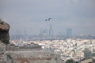 صورة  city wall. birds buildings turkey istanbul