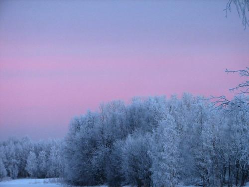pink blue trees winter snow nature forest suomi finland landscape bravo scenery frost searchthebest january oulu lumi talvi maisema metsä tammikuu luonto sininen puut violetti kuivasjärvi instantfave pakkanen outstandingshots abigfave anawesomeshot