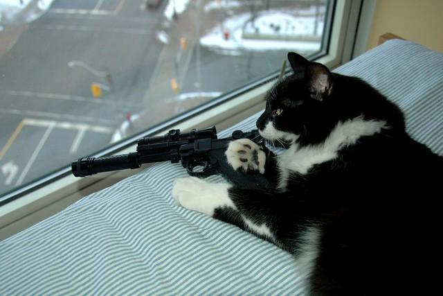 sniper cat | Flickr - Photo Sharing!