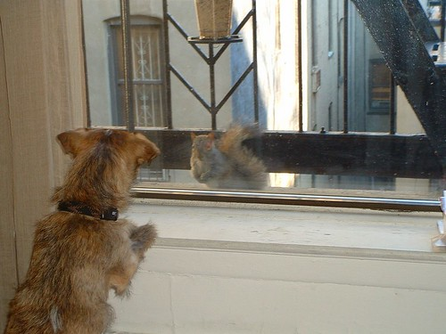 Staring contest 2 - A squirrel comes to the window