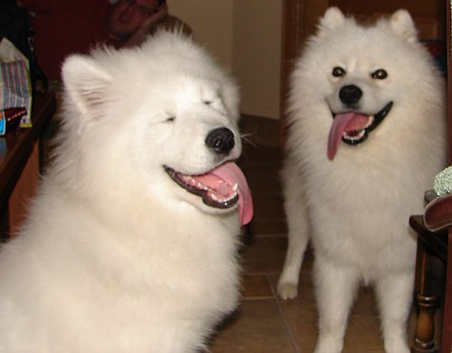 Happy Dogs Smiling Happy Dogs by Michelle in