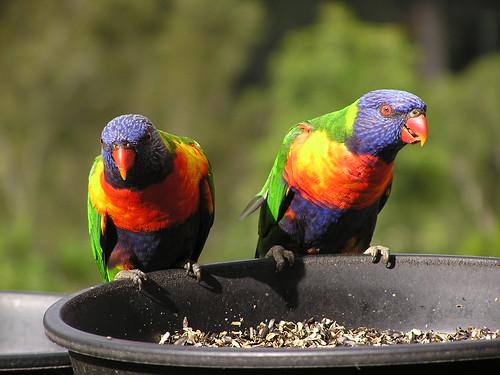 Name the Birds