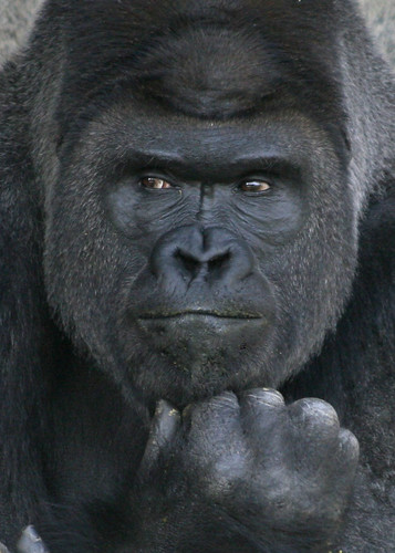 the thinker, a portrait