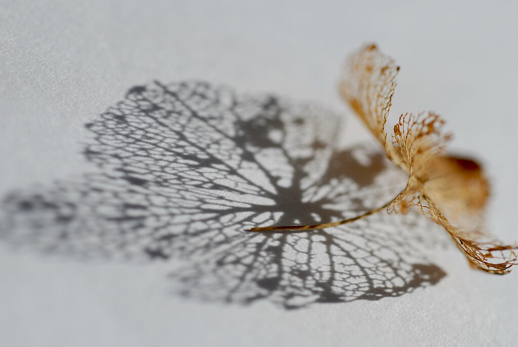 Decay   hdagerus on flickr