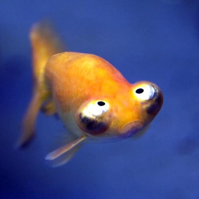Funny fish | Flickr - ...