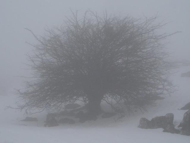 Zuhaitz lainon / arbol y niebla / tree and fog