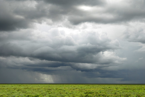 bad weather on the Serengeti plains