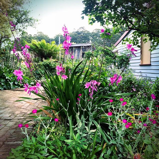 Garden. Trentham House. Port Arthur.