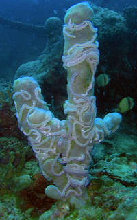 Sea cucumbers & sponge (Cebu, Philippines)