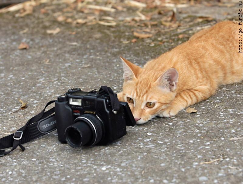 camera n cat