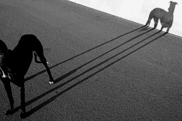 Connexió Gos