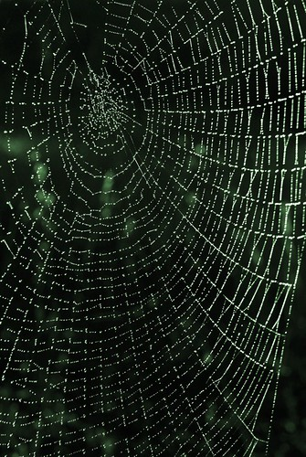 Web with Dew Drops 0573