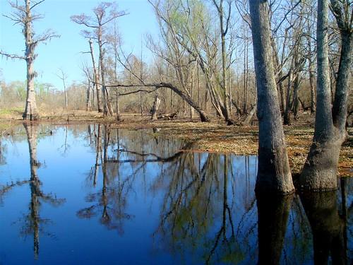 lake landscape louisiana alligator spanish bayou batonrouge swamp cypress salvinia manchac dsct30