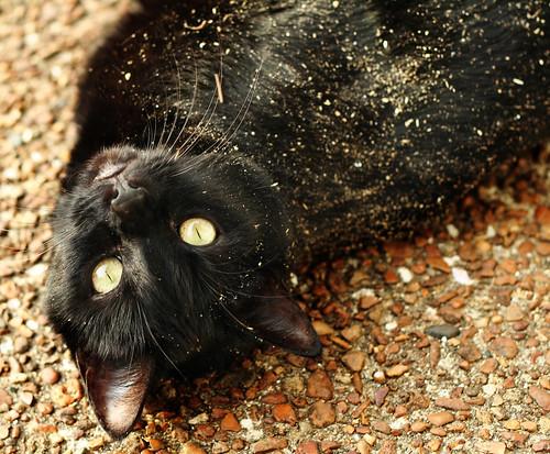 Stupid filthy cat