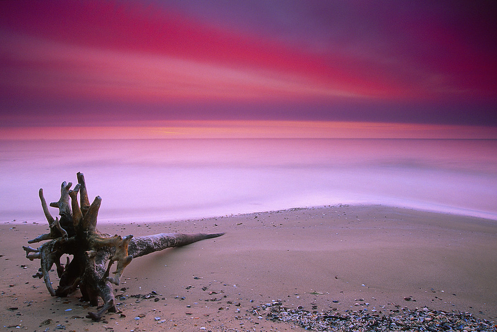 Driftwood on the Chesapeake