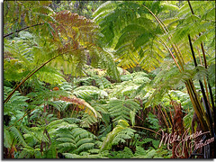 Thurston Tube Ferns