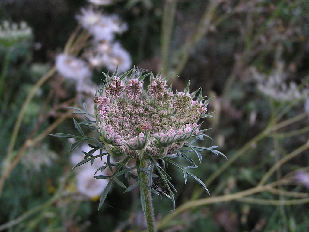 flores desde Caldera de los Marteles hasta Tenteniguada Gran Canaria
