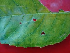 flower(0.0), plant(0.0), insect(0.0), produce(0.0), fauna(0.0), plant stem(0.0), petal(0.0), leaf(1.0), macro photography(1.0), flora(1.0), green(1.0), plant pathology(1.0),