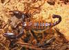 Найдены следы гигантского скорпиона.  Наука и техника Новости сейчас: It's...