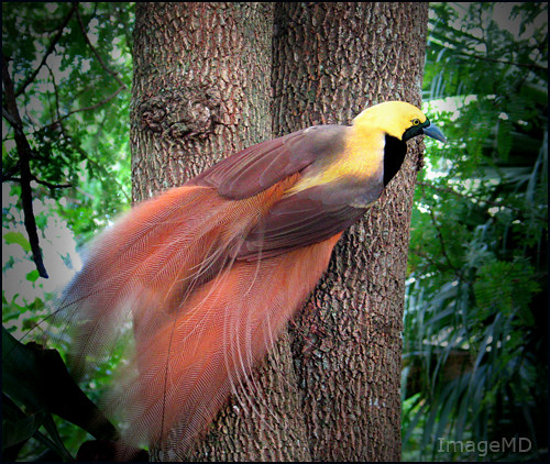 Aves do Paraiso