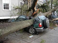 accident(1.0), asphalt(1.0), traffic collision(1.0), tree(1.0),