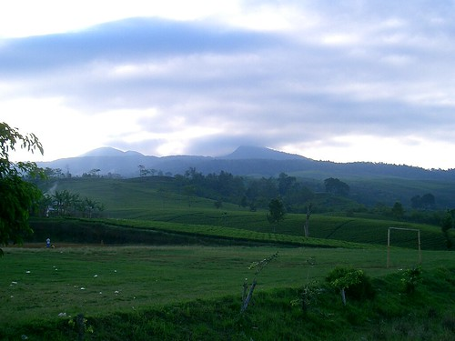 tea plantations north of Bandung, Tangkuban Perahu volcano in the background