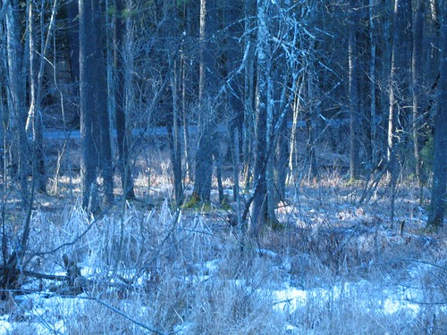 trees sunrise woods frost