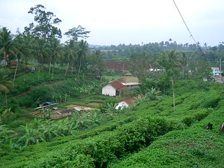 green scenery in Sukabumi, Java