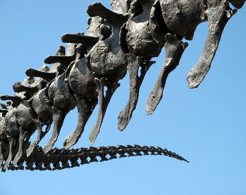dinosaurs by derek*b