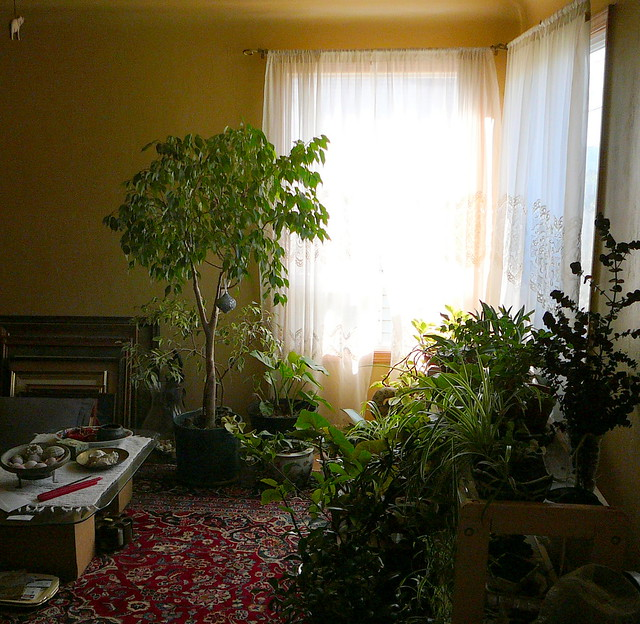 Living room plants flickr photo sharing for Plants in a living room