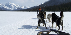 dog, winter, vehicle, snow, mushing, dog sled, sled dog racing, sled dog,