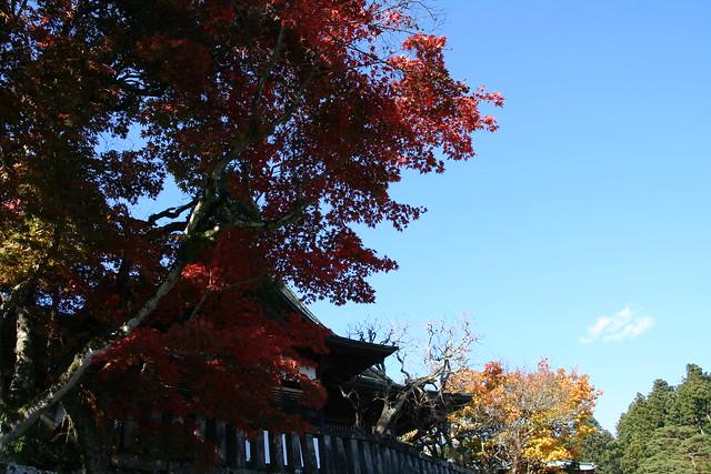 Shogun Island Park Coupons