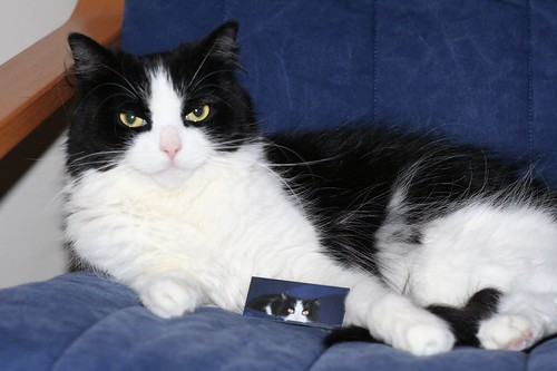 Palomita With Her Moo Card