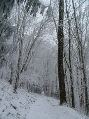 woodland, branch, winter, tree, snow, frost, forest, natural environment, winter storm, blizzard, freezing,
