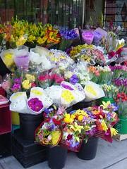 flowers / plants / trees
