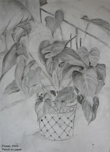 Plant by yarijik