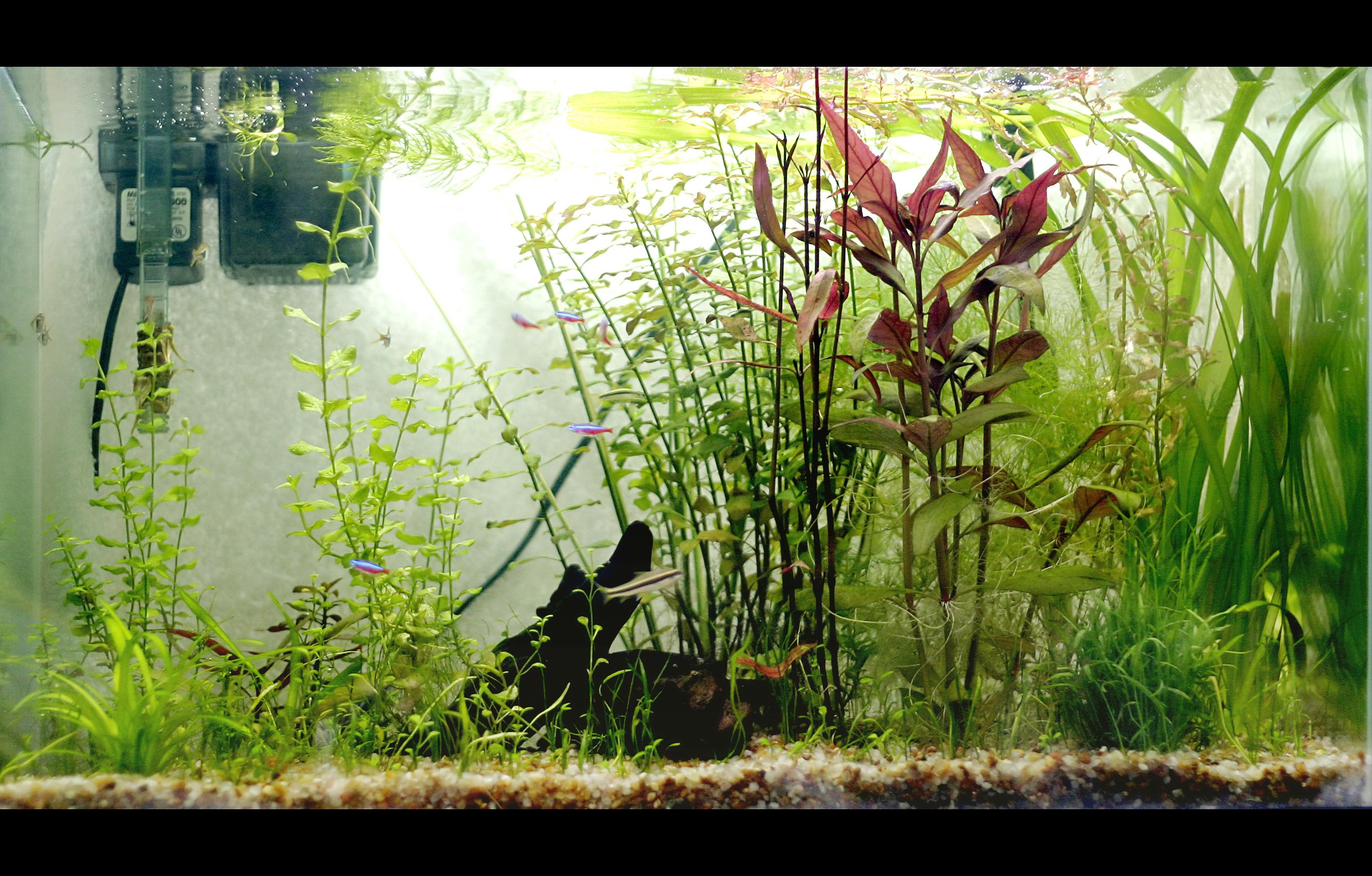 Image Result For Diy Co Aquarium