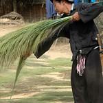 Drying Bamboo Flower Reeds - Luang Prabang, Laos